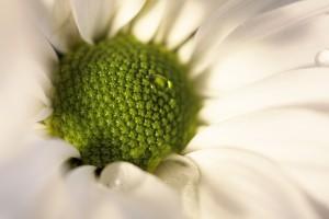 vlhkost_v_dobe_kvetu