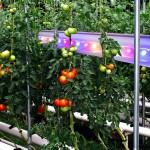 Rostliny pěstované pod umělým osvětlením + jejich specifika a nároky