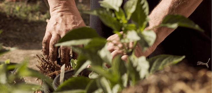 Jak Na Rostlinách Poznáte Přebytek Nebo Nedostatek Některých Látek
