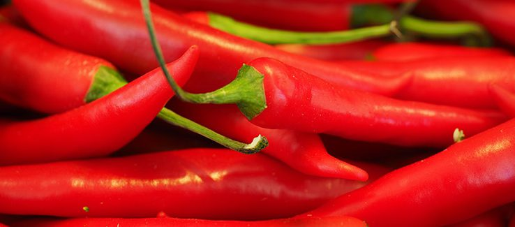 Chilli Papričky Můžete Doma Pěstovat Po Celý Rok