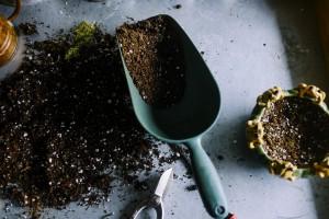 Význam substrátu pro růst a bohatou sklizeň