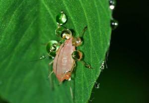 hmyz na listu