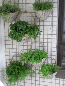 bylinky na balkóně