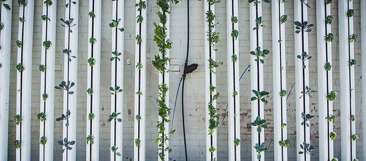 Které Hnojivo Pro Hydroponii Bude Pro Vaše Pěstování To Pravé?