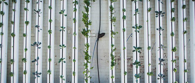 Poznejte Hnojiva, Která Se Hodí Pro Moderní Hydroponické Pěstování