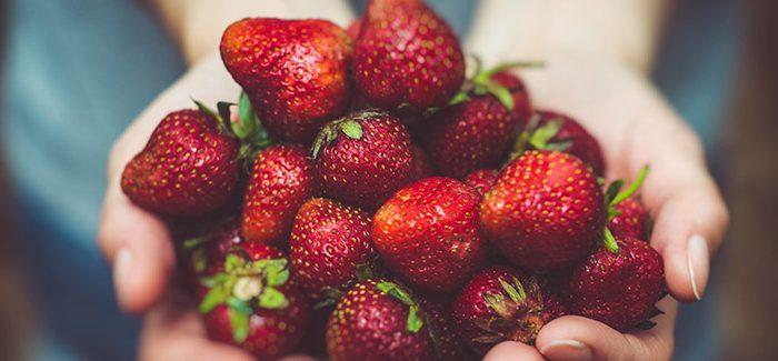 Naučte Se Správně Pěstovat Jahody A Užívejte Si Sladkých Plodů Po Celý Rok
