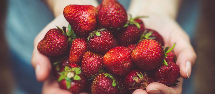 Jak Vypěstovat Slaďoučké Jahody V Domácích Podmínkách