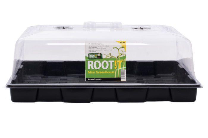 Root !t.