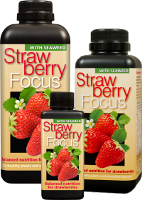 Strawberry Focus.