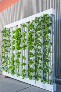 hydroponický systém