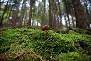 les s houbou