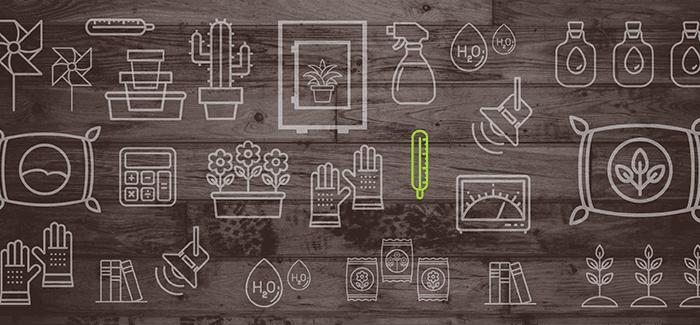 Vybíráme První Rostlinku Pro Domácí Pěstování. Na Co Si Dát Pozor?