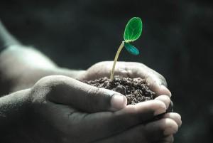 Pěstování v půdním substrátu
