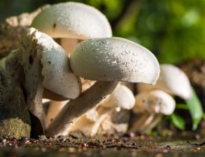 Co jsou to mykorhizní houby a jaké mají účinky?