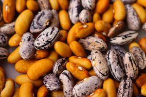 Jak na moření semen?