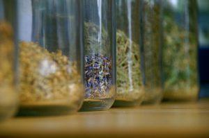 Sušením bylinek prodloužíte jejich využitelnost.