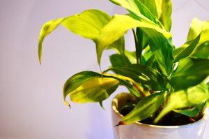 Rozhovor o indoor pěstování s P. Klaassenem