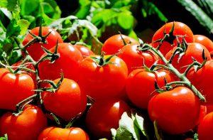 Vychutnejte si domácí rajčata i vy.