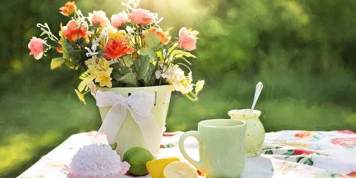 Jak Mít Krásné A Zdravé Rostlinky?