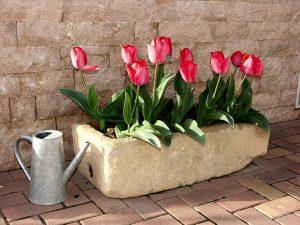 Správně hnojené květiny rychle porostou
