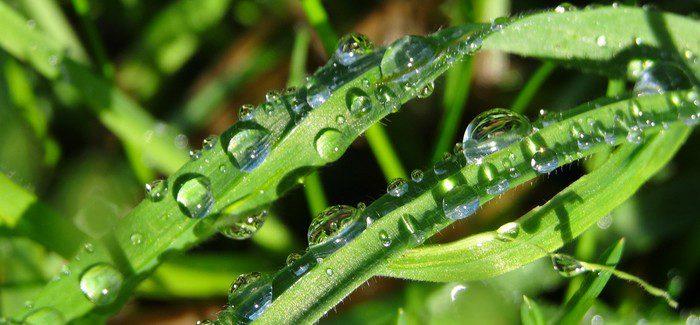 Aditiva – Podpora Správného Vývoje Rostlin