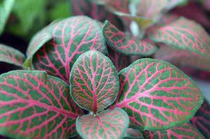 Oxid uhličitý podpoří růst rostlin
