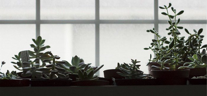 CO2 V Pěstírně Vašim Rostlinkám Pomůže