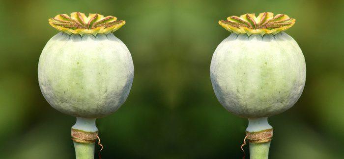 5 Ukazatelů, Podle Kterých Poznáte Kvalitu Klonu