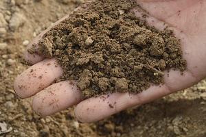 Křemík zajišťuje zajišťuje silné a zdravé kořeny.