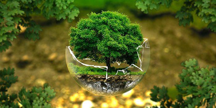 Bioponie Neboli Organická Hydroponie: Co To Je A K čemu Je Dobrá?