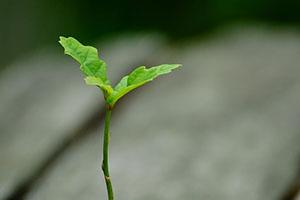 Mykorhiza zajistí skvělé výsledky při pěstování.
