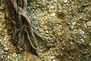 Mykorhizu je třeba kombinovat se správným hnojivem.
