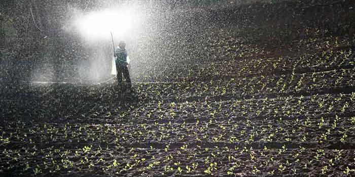 Díky Hnojivu Porostou Vaše Květiny Jako Z Vody.
