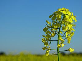 Dávejte pozor na složky v hnojivu, rostliny potřebují jiné látky v různých obdobích.