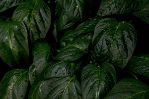 Plantpal dodá rostlinkám dostatek vláhy