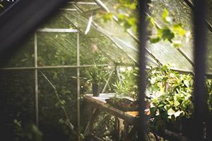 Do skleníku se vaši mazlíčci jen tak nedostanou.