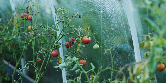Pěstování Ve Skleníku: 7 Důvodů, Proč Si Pořídit Skleník