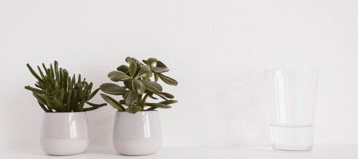 PlantPal – Samozavlažovací Systém Do Každého Květináče