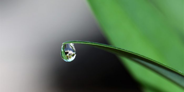 Dopřejte Svým Rostlinkám V Létě Dostatek Vláhy