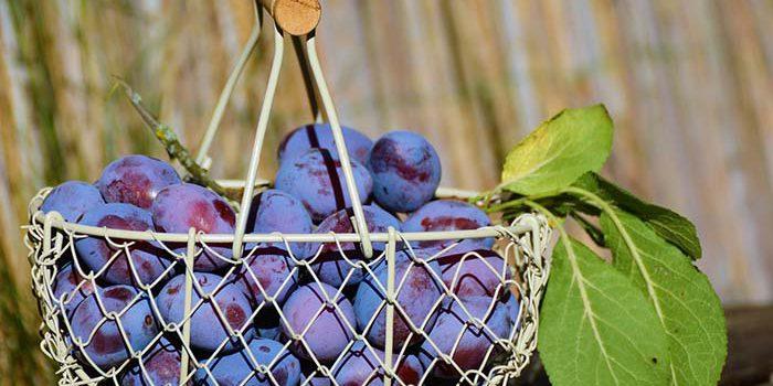 5 Tipů, Jak Zpracovat Srpnovou úrodu Z Vlastní Zahrádky