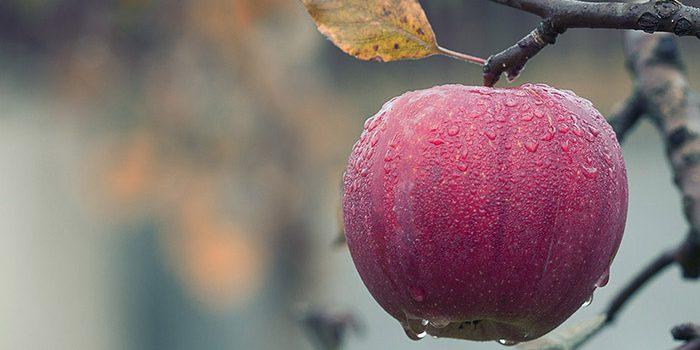 Na Podzim Je Nutné Připravit Zahrádku Na Přezimování.