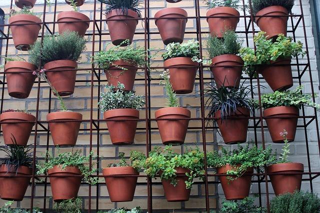 Odhadněte správnou velikost květináče pro indoor pěstování.