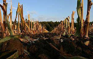 Různá hnojiva jsou vhodná pro květ, kořeny nebo zelené části rostlin.