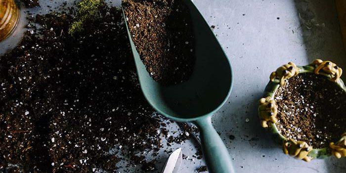 Velký Přehled Hnojiv: Která Použít Na Růst A Která Na Stimulaci Květu?