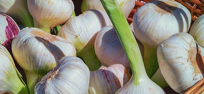 Jak Sklízet A Skladovat česnek, Aby Nezplesnivěl A Neztratil Svou Chuť