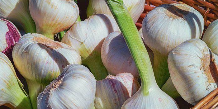 Víte, Jak Správně Skladovat česnek?