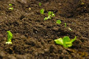 Mezi speciální hnojiva se řadí hnojiva pro hydroponii či mykorhizní hnojiva.