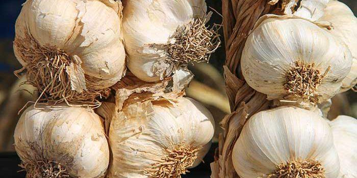 Česnek Je Velice účinný Přírodní Lék.