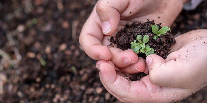 Mikroorganismy V Půdě Prospívají Rostlinám A Zvyšují úrodu