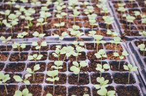 Speciální Zahradnictví v e-shopu nabízí předřadníky i stínidla pro indoor pěstování.
